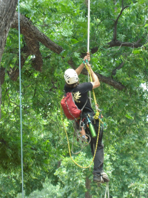 Tree Climbers Tree Care Fayetteville AR
