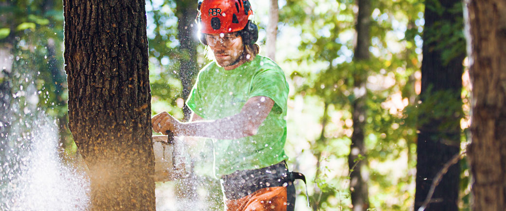 isa certified arborist study guide